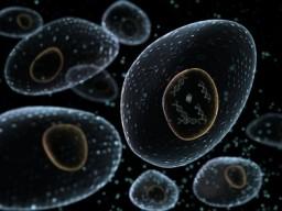 Zellen im Körper