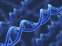 DNA- Matrix