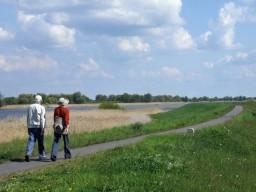 Spaziergänge helfen das Gehirn zu trainieren, denn sie sind abwechslungsreich.