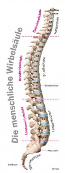 Rückenschmerzen zählen zu den Volkskrankheiten in Deutschland.